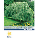 Pirtle Nursery Weeping Willow #5, 3.74 gal.