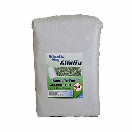 Atlantic Hay Alfalfa, 20 lb  at Tractor Supply Co