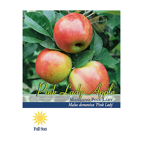 Pirtle Nursery Pink Lady Apple #5, 3.74 gal.