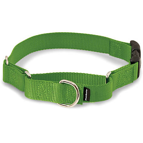 petsafe martingale collar with quick snap buckle at