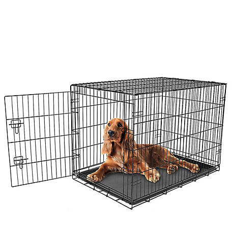 Carlson Secure Single Door Crate, Intermediate