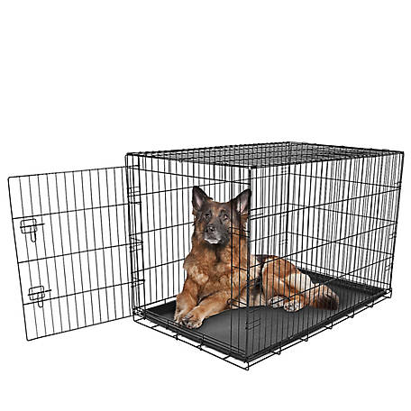 Carlson Secure Single Door Crate, Extra Large