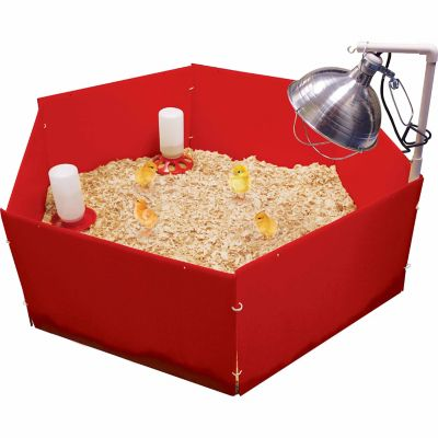 828180960edc Harris Farms Chick Nursery with Brooder Lamp Stand at Tractor Supply Co.