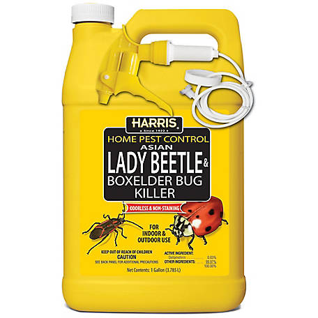 Harris Asian Lady Beetle and Box Elder Bug Killer, HBXA-128