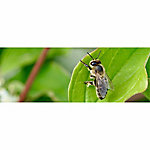 Crown Bees Certificate for Leafcutter Bee Cocoons, 50 Count