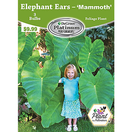 Degroot Elephant Ears Mammoth 3 Bulbs At Tractor Supply Co