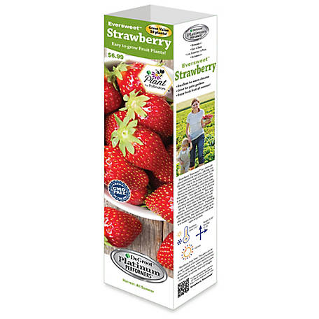 DeGroot Strawberry Eversweet EB, 10 Plants