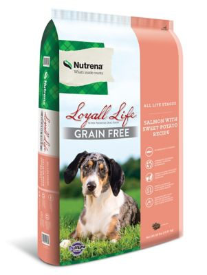 Buy Loyall Life Grain Free All Life Stages Salmon & Potato dog Food; 30 lb. Bag Online