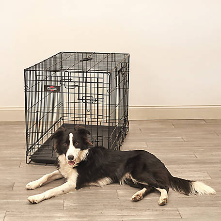 Pet Sentinel 25X22X36 Large Wire Pet Crate, 530079