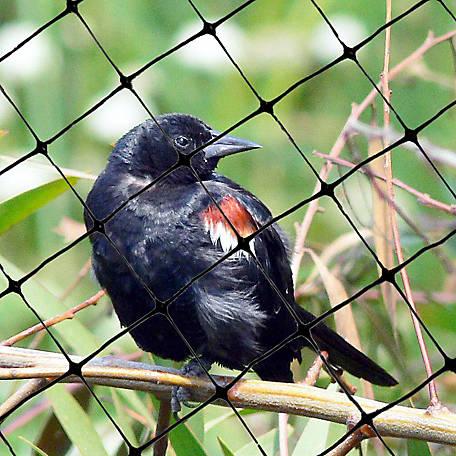 Bird X Lightweight Plastic Bird Netting 100 Ft X 14 Ft