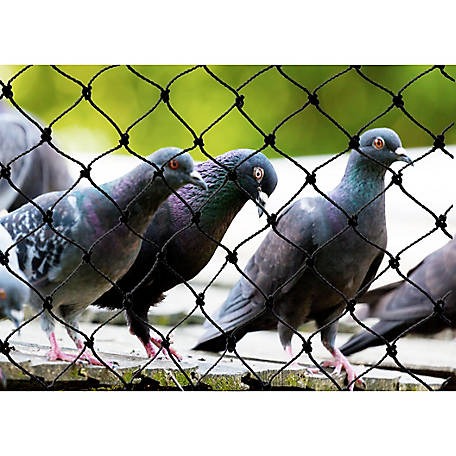 """50/' x 50/' Heavy Knotted Aviary 2/"""" Poultry Net Netting"""