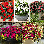 Cottage Farms SunPatiens Color Collection - 10 Piece - Plant with Purpose