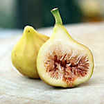Cottage Farms Fig 'LSU Gold', 1-Piece Plant with Purpose