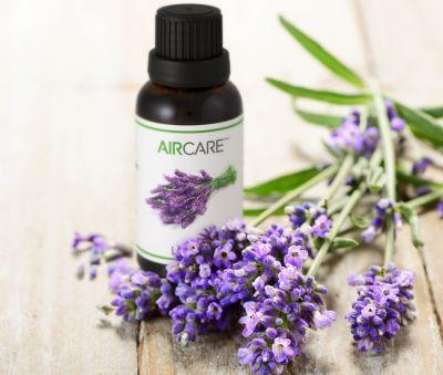 AIRCARE Lavender Essential Oil 30 mL Bottle; EOLAV30