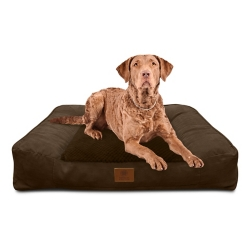 Shop American Kennel Club Dog Supplies at Tractor Supply Co.