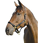Shires Leather Crown Topaz Halter