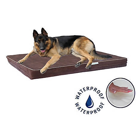 Go Pet Club Solid Memory Foam Orthopedic Dog Pet Bed with Waterproof Cover Chocolate