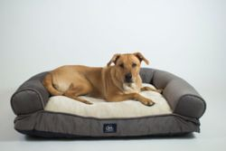 Shop Serta Dog Beds at Tractor Supply Co.