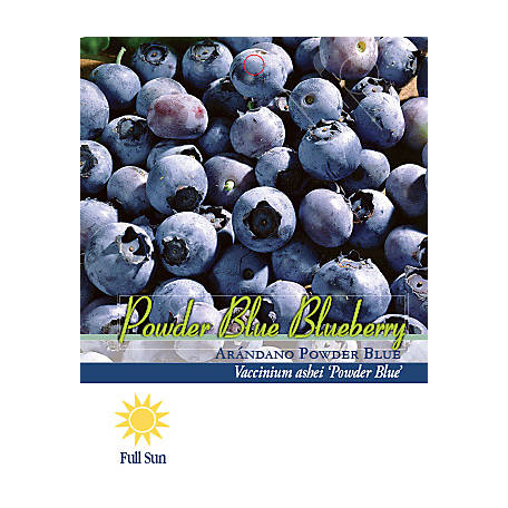 Pirtle Nursery Powder Blue Blueberry #1, 2 5 qt  at Tractor Supply Co