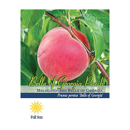 Pirtle Nursery Belle Of Georgia Peach 7 6 093 Gal At Tractor Supply Co