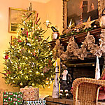 Cottage Farms Direct Now And Later Christmas Tree Combo
