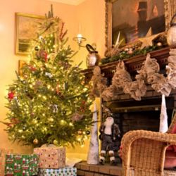Shop Fresh Live Cut Christmas Tree with Free Door Swag at Tractor Supply Co.