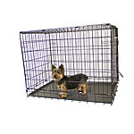 KennelMaster 42 in. x 28 in. x 30 in. Folding Kennel Crate With Double Door, FKC422830