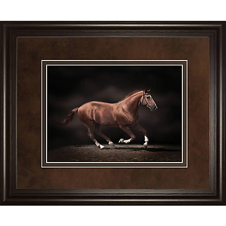 Classy Art 34 in. x 40 in. Stallion On Black Print, DM5559