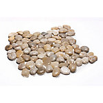 Rain Forest White Midpolish Pebble Tile, 12 in. x 12 in.