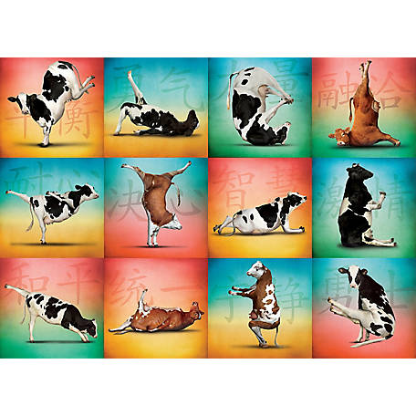 Willow Creek Press Cow Yoga 1000-Piece Puzzle, 709786035762