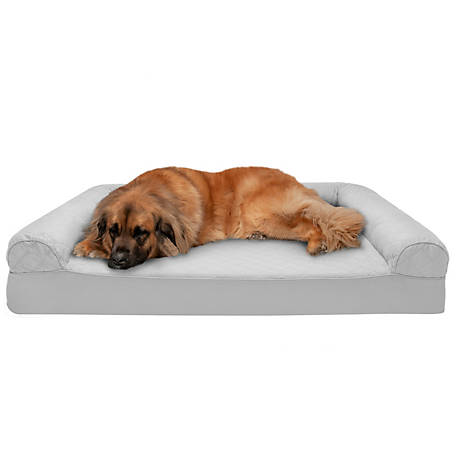 Stupendous Furhaven Pet Quilted Memory Foam Sofa Dog Bed At Tractor Gmtry Best Dining Table And Chair Ideas Images Gmtryco