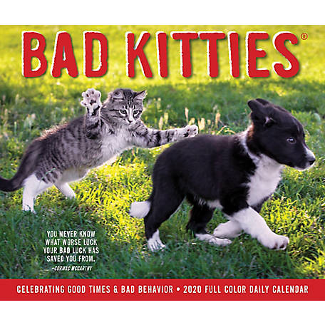 Willow Creek Press Bad Kitties 2020 Box Calendar, 8737