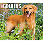 Willow Creek Press Goldens 2020 Box Calendar, 8874