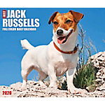 Willow Creek Press Jack Russells 2020 Box Calendar, 8904