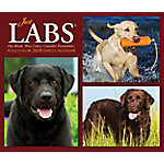 Willow Creek Press Labs 2020 Box Calendar, 8928
