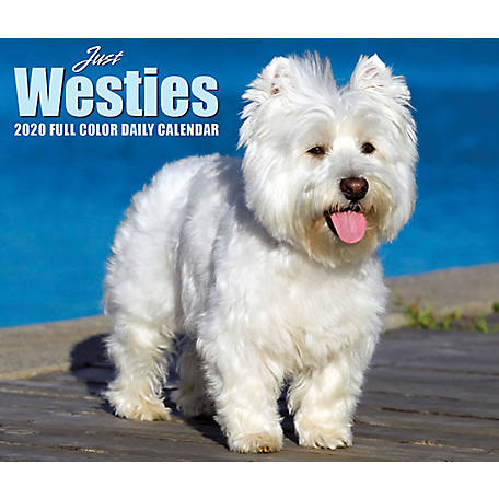 Willow Creek Press Westies 2020 Box Calendar, 9000