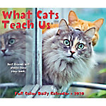 Willow Creek Press What Cats Teach Us 2020 Box Calendar, 9017