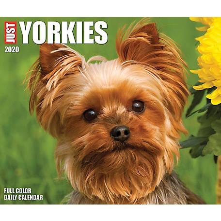 Willow Creek Press Yorkies 2020 Box Calendar, 9048 at