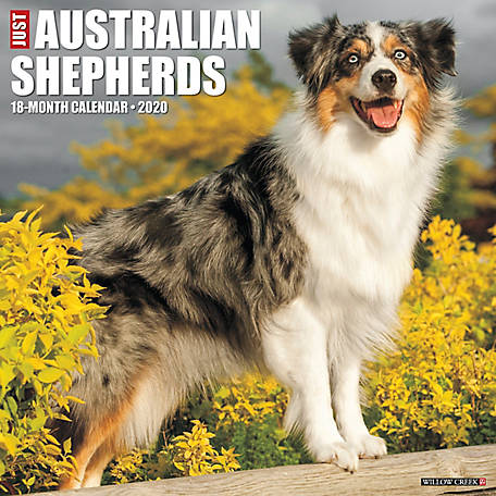 Willow Creek Press Australian Shepherds 2020 Wall Calendar, 5255