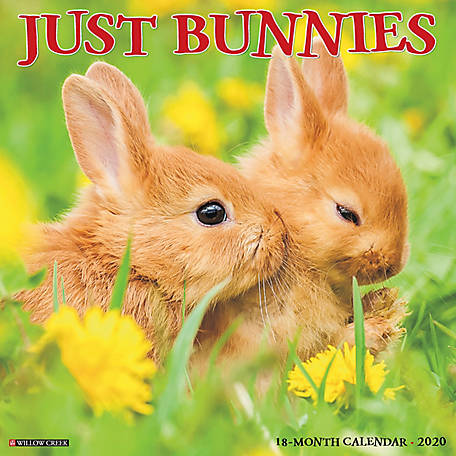 Willow Creek Press Bunnies 2020 Wall Calendar, 5637