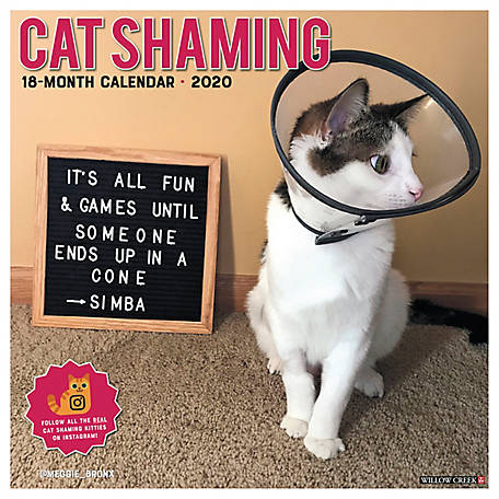 Willow Creek Press Cat Shaming 2020 Wall Calendar, 5750
