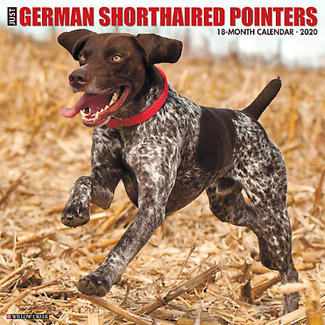 Willow Creek Press German Shorthaired Pointers 2020 Wall Calendar, 6429