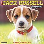 Willow Creek Press Jack Russell Puppies, 6825