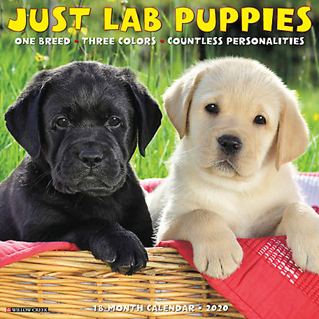 Willow Creek Press Lab Puppies 2020 Wall Calendar, 6894