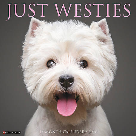 Willow Creek Press Westies 2020 Wall Calendar, 8171