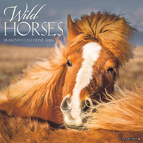 Willow Creek Press Wild Horses 2020 Wall Calendar, 8324