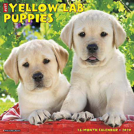 Willow Creek Press Yellow Lab Puppies, 8362 at Tractor Supply Co