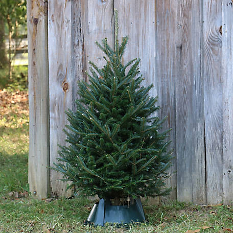 National Plant Network Live Noble Fir 32 to 42 in. Fresh Cut Christmas Tree with Stand, TSC9030