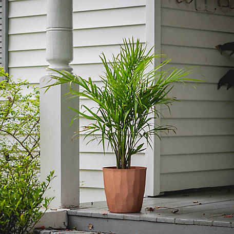National Plant Network Majesty Palm, Plant with Purpose, TSC7218