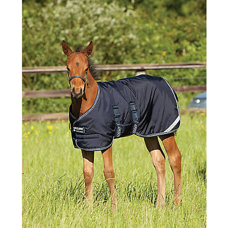 Amigo Foal Blanket Turnout expands by 6 in. in length, AARH1V